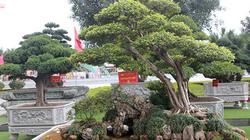 Đại gia Thái Nguyên mang cả vườn cây triệu đô đi triển lãm