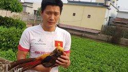 Làm giàu khác người: Về quê nuôi chim trĩ 7 màu, bán 12 triệu/cặp