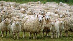 Chăn nuôi 4.0: Học kỹ thuật trên Youtube, lướt web cập nhật thị trường