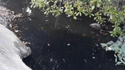 Hải Phòng: Nước thải từ dự án Pruksa Town xả thẳng ra môi trường