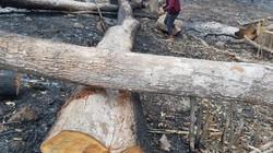 Gia Lai: Từng vạt rừng Mang Yang bị chặt, đốt để trơ trụi