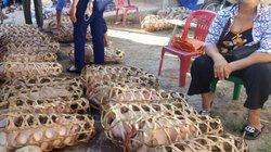 Lạng Sơn: Xuất hiện lợn chết bất thường, chưa rõ nguyên nhân