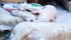 Gia Lai: Kịp thời tiêu hủy đàn heo bị bệnh lở mồm long móng