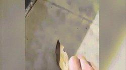 """Video: Người đàn ông nhặt lá khô, không ngờ """"chiếc lá"""" tung cánh bay"""
