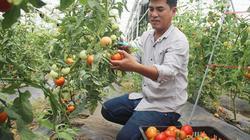 Trồng vườn cà chua đẹp nơi heo hút, khách vẫn tìm vào mua