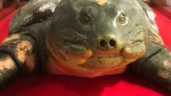 Hôm nay, Hà Nội nhận tiêu bản rùa Hồ Gươm