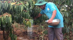 """Nhiều """"đại gia"""" chung tay gỡ khó cho hạt cà phê Việt"""