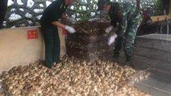 Bắt giữ hơn 5.000 con gà giống nhập lậu lúc nửa đêm