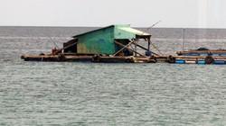 Kiên Giang: Cảnh giác với sinh vật lạ nổi lên từ đáy biển hại cá nuôi