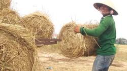 """Rơm """"đắt xắt ra miếng"""", nông dân thu tiền triệu mỗi ngày"""