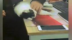 Những khoảnh khắc ngủ gật hài hước của động vật