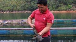 Lạ: Nuôi cá khỏe, lớn nhanh bằng vôibột, lá xoan, toàn trúng lớn