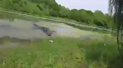 Cá sấu khổng lồ lao lên bờ truy đuổi người câu