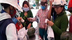 """Giá sốc 4.900 đồng/kg: Dân Khánh Hòa tranh nhau """"giải cứu"""" dưa hấu"""