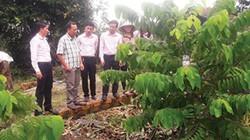 Bỏ phố lên rừng trồng na Thái, na Đài Loan thu tiền tỷ
