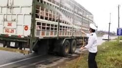 Tin mới nhận: Quảng Trị xuất hiện dịch tả lợn Châu Phi