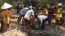 Quảng Trị: Cán bộ, nhân dân chôn cất, thắp hương cụ rùa nặng 1 tạ