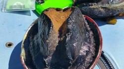 Bào ngư lớn nhất thế giới, 10 người mới ăn hết 1 con