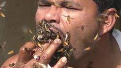 """Chuyện lạ có thật: Người đàn ông """"nhốt"""" ong vào miệng khi lấy mật"""