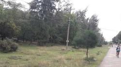 Thông tin mới nhất về vụ nhiều cán bộ ở TT-Huế được cấp đất rừng