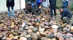 Nhặt đá ra tiền là có thật, thậm chí bán một hòn đá có thể mua được cả căn nhà