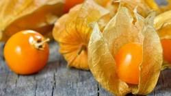 Giống cây/quả nào mọc dại ở Việt Nam nhưng sang nước ngoài lại có giá đắt đỏ?