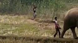 Video: Chọc giận voi rừng, người đàn ông Ấn Độ bị đuổi chạy trối chết