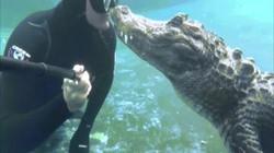 Video: Thợ lặn chạm trán cá sấu khổng lồ và nụ hôn đầy kinh ngạc