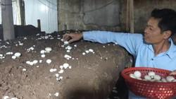 Hải Phòng: Trồng la liệt các loại nấm ngon, thu cả tỷ bạc mỗi năm