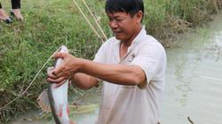 Nuôi loài cá quý hiếm vây đỏ như son ở ao đất, bán 300 ngàn/ký