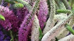 Theo chân người sành sỏi chọn hoa độc lạ chưng Tết Canh Tý