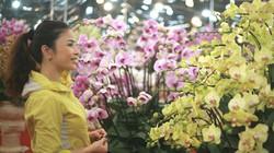 Lan hồ điệp giá trăm triệu đi máy bay từ Đà Lạt ra Hà Nội đón Tết