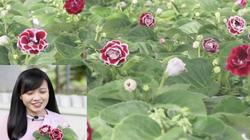 """Mê hoặc sắc màu """"nữ hoàng hoa cảnh"""" của lão nông ở vùng trung du"""