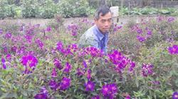 TP Thái Nguyên: Làng hoa Thịnh Đức nhiều hoa đẹp bán Tết