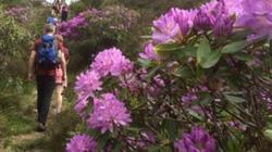 Cây hoa đẹp nhưng có độc mà nhiều người vẫn đổ tiền tỷ mua về làm cảnh