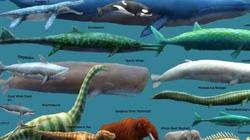 Loài động vật nào đáng sợ nhất trong lịch sử trái đất?