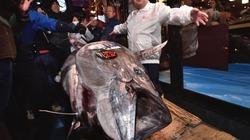 Nghe giá đã giật mình, một con cá được bán hơn 41 tỷ đồng