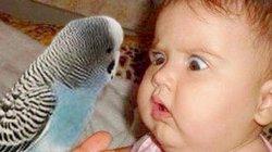 Chết cười với các nhóc tỳ khi lần đầu tiên gặp gỡ thú vật