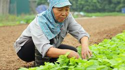 Huyện Gia Lâm đạt chuẩn nông thôn mới: Hiệu quả từ cách làm bài bản