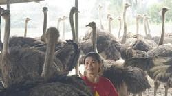 Hà Nội: Nuôi loài chim ngờ nghệch, chân dài cả mét, Tết có tiền to