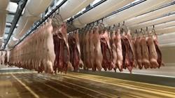 Giá heo hơi hôm nay 8/1: Lo cạnh tranh từ thịt nhập