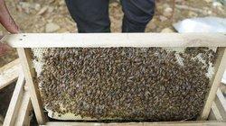 Công phu luyện ong nhả mật dưới chân núi Ba Vì, lãi cả trăm triệu