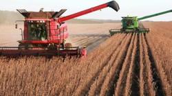 Trung Quốc sẽ thương mại hoá 192 giống cây biến đổi gen