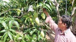 Khánh Hoà: Lan tỏa mô hình du lịch nông nghiệp