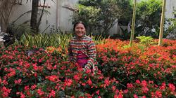 Không mai, không cúc, trồng loài hoa lạ bán Tết lại đắt hàng