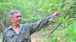 Chuyện lạ Quảng Ninh: Bán lá...cây rừng kiếm không ít tiền