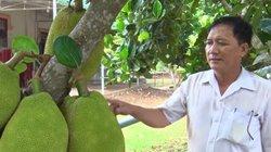Đồng Nai: Một năm mít Thái rớt giá mà 1 cây vẫn lời 1 triệu đồng