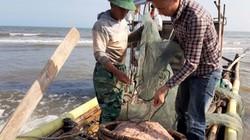 """""""Dàn trận"""" săn moi, ngư dân Thanh Hoá kiếm 2-3 triệu mỗi ngày"""