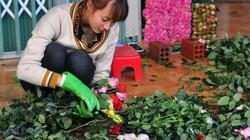 Trồng hoa hồng dưới chân núi Langbiang, lãi ròng 1,2-1,3 tỷ/năm