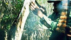 Cận Tết về rừng U Minh theo dân đi gác kèo lấy thứ mật ong nức tiếng